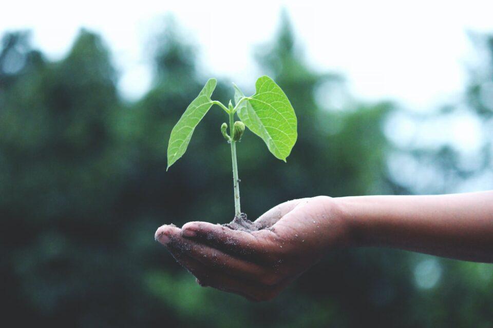 Calsense Three Pillars of Sustainability